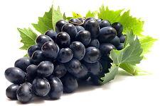 Black Grape Sweet Vine Fruit  Plant Seeds 13+ Seeds Uk Stock BUY 2 GET 1 FREE