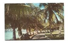 PALM BEACH FL Lake Trail Palm Trees Bridge Vtg Postcard
