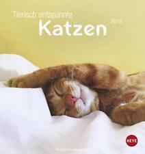 Tierisch entspannte Katzen Postkartenkalender - Kalender 2019