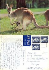Australia - Chester Hill - Red Kangaroo and Joey (A-L 110)