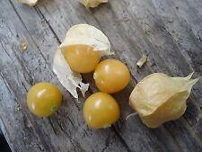 """Ground Cherry"" or Strawberry Husk Tomato *HEIRLOOM* SEEDS OF LIFE"