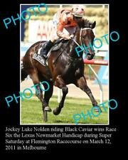 BLACK CAVIAR HORSE RACING CHAMPION LARGE PHOTO 4