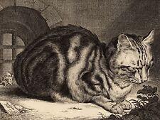 CORNELIS VISSCHER DUTCH LARGE CAT OLD ART PAINTING POSTER PRINT BB5157A