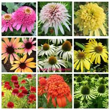 100 Echinacea Flower Seeds Brauneria Rare 14 Kinds Nice Decorative Garden Plants