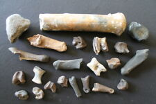 Fossil lot Pleistocene Sloth Bison Horse Reptile Whale Deer tooth Patella