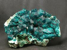 """BEAUTIFUL DIOPTASE CLUSTER FROM CONGO - 3.2"""""""