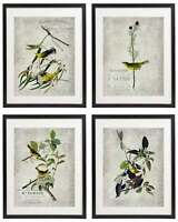 Vintage Bird & Botanical No.2 Home Decor Wall Art Print Set of 4 Prints UNFRAMED