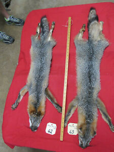 grey fox pelt skin hide with feet claws professionally tanned soft fur