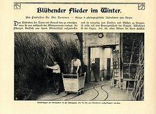 Prof. DR. Udo Dammer fiorente lillà in inverno la somministrazione nel fai affluire stanza 1907