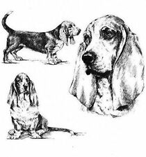 Basset Hound - 1963 Vintage Dog Art Print - Matted *