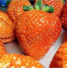 200x Orange Everbearing Sweet Strawberry Seeds Sow Delicious Berry Fruit Plant