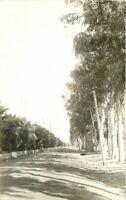 Azusa Arizona Avenue Palms Trees RPPC Photo Postcard 20-4871