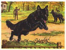 1952 Dog Art Card Austria Tobacco Company Bildwerk Belgian Sheepdog Groenendael