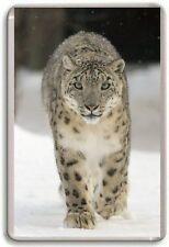 Snow Leopard Fridge Magnet 03