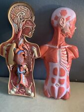Vtg Hubbard Scientific Human Body Anatomy Science Model School Doctors Medical