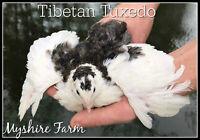 RARE Myshire Farm coturnix quail hatching Eggs! 110 6 Different RARE Colors!!!