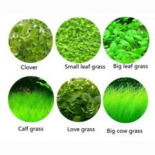 New Aquarium Plant Seeds Fish Tank Aquatic Water Grass Foreground Easy Plants 5g