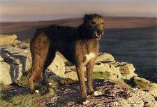 More details for steven townsend bella (unframed) female lurcher lanscapes dog art canine sea