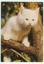 Alte Ansichtskarte Postkarte Katze farbig