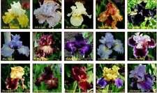 Iris seeds, Mix Flowers, Garden, Flowers,50+seeds