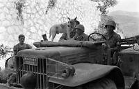 WW2 Photo WWII  US Army 3rd Infantry Military Police with Dog Italy 1944  / 1408