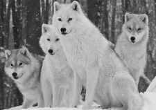 Wolf pack Photo Poster Print ONLY Wall Art A4