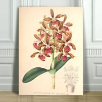 JEAN LINDEN - Beautiful Pink Orchid #2- CANVAS ART PRINT POSTER -24x16""