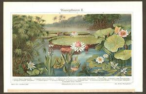 1905. BOTANY. AQUATIC PLANTS & FLOWERS. II. Antique chromolithograph