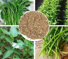Thai Water Spinach Kangkong Vegetable Seeds heirloom organic swamp cabbage