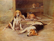 FOXHOUND CHARMING DOG GREETINGS NOTE CARD GROUP OF HOUND PUPS PLAY IN KENNEL