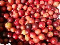 FREE GIFT-CAMU CAMU WHOLE SUPER FRUIT POWDER AIR DRIED VITAMIN C NON-GMO-1-6 LBS