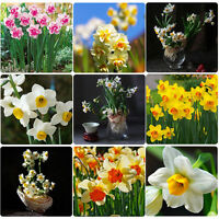 400x Mixed Colors Daffodil Narcissus Flower Bonsai Seeds Home Garden Plant Decor