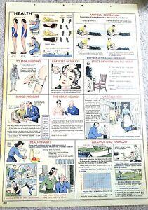 "Original 1955 Science Pull Down School Chart of Health  28.5 x 42""  Welch Man."