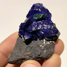 Fine Mineral Specimen - AZURITE & MALACHITE - Milpillas Mine, Mexico - ON MATRIX