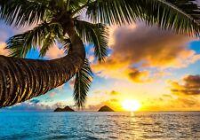 XXL Poster 100 x 70cm Palme am Strand im Licht des Sonnenuntergangs (S-837)