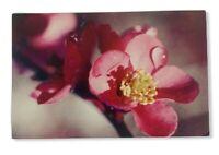 Vintage Pink Flower Postcard (Unposted)