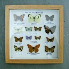 More details for a display of british butterflies in a quality oak effect frame, ready to hang