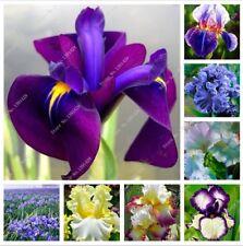 100PCS Mix de Iris Graines de Fleurs Graines Plante pour Jardin Bonsai Plant HOUSE HOME