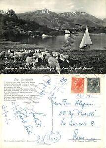 Cartolina di Amatrice, pecore al pascolo e lago di Scandarello - Rieti