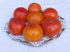 Dwarf Project Tomato - WHEROKOWHAI - 15 Heirloom Vegetable Seeds