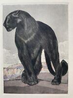 PAUL JOUVE GRAVURE ANIMALIERE ART DECO Tigre Panthère Noire Lion Black Panther