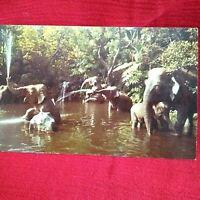 Disneyland Magic Kingdom ELEPHANT POOL Adventureland Vintage Postcard NEW