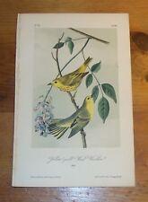 Birds of America. Audubon. Yellow-poll Wood Warbler. 1861. Lockwood edition.