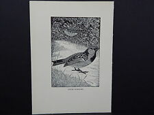 BIRDS, ERIC FITCH DAGLISH, Engraving, c. 1948 House Sparrows #26
