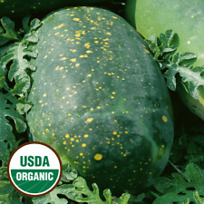 10 Organic Yellow Moon And Stars Watermelon Seeds - Everwilde Farms Mylar Packet