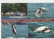 Hectors Dolphins Akaroa Postcard New Zealand 525a