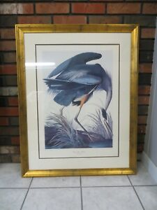Framed 1834 Robert Havell #43 Audubon Great Blue Heron 29 x 37 Print Plate 211