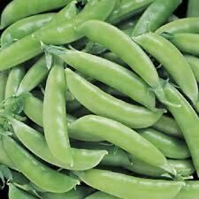 2017 Heirloom Super Sugar Snap Edible Pod Pea Seed 2 oz approximately 230 seeds