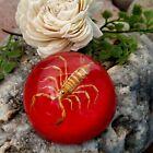 "Creepy Scorpion Paperweight 2"" Taxidermy Gothic Halloween Black Wedding RED"