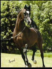 Arabian Horse Times - July 2004 - Vol. 35, No. 2